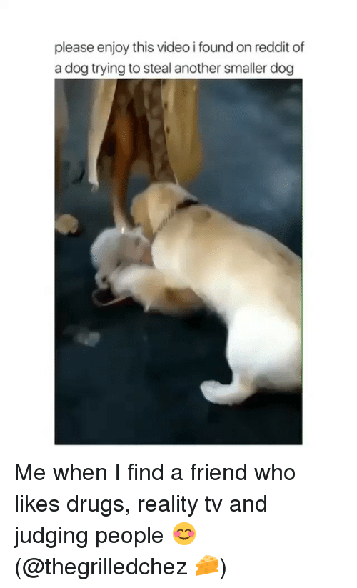 Drugs, Reddit, and Video: please enjoy this video i found on reddit of  a dog trying to steal another smaller dog Me when I find a friend who likes drugs, reality tv and judging people 😊 (@thegrilledchez 🧀)