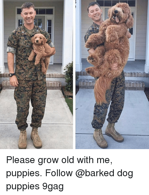 9gag, Memes, and Puppies: Please grow old with me, puppies. Follow @barked dog puppies 9gag