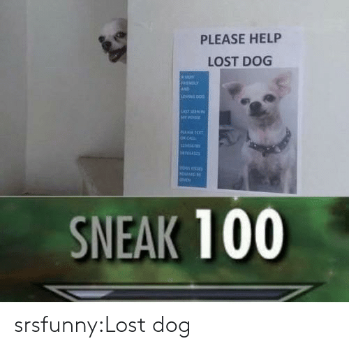 Tumblr, Lost, and Blog: PLEASE HELP  LOST DOG  RIEMUL  vNG DO  LAS EN  O.CALL  WARD  avee  SNEAK 100 srsfunny:Lost dog