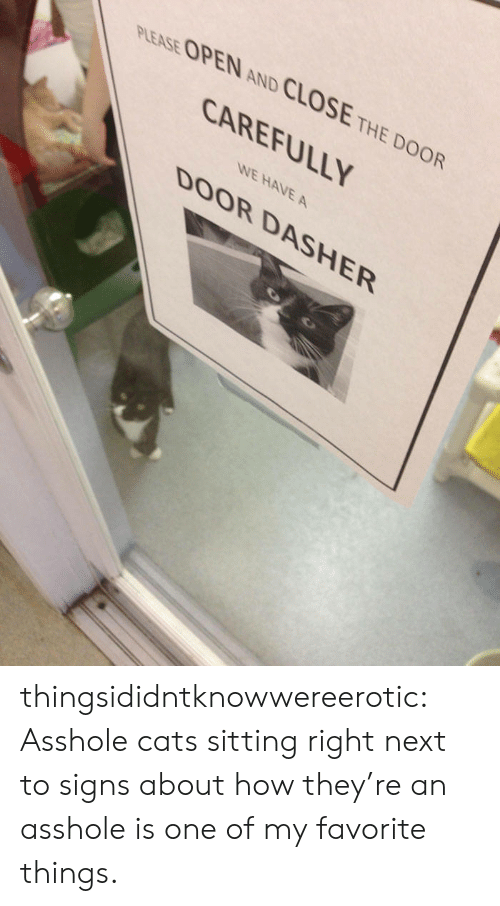 Cats, Tumblr, and Blog: PLEASE OPEN AND CLOSE THE DOOR  CAREFULLY  WE HAVE A  DOOR DASHER thingsididntknowwereerotic:  Asshole cats sitting right next to signs about how they're an asshole is one of my favorite things.