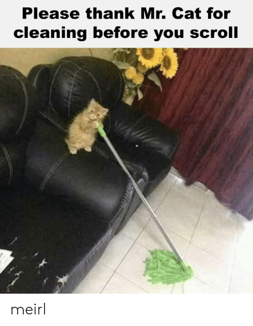 MeIRL, Cat, and You: Please thank Mr. Cat for  cleaning before you scroll meirl
