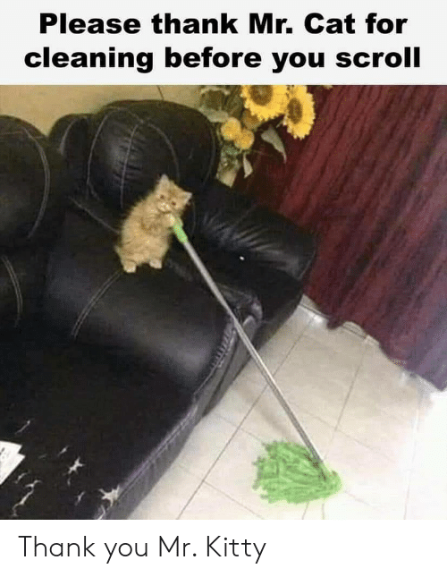 Thank You, Cat, and You: Please thank Mr. Cat for  cleaning before you scroll Thank you Mr. Kitty