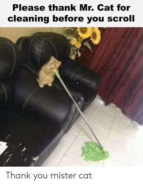 Thank You, Cat, and You: Please thank Mr. Cat for  cleaning before you scroll Thank you mister cat