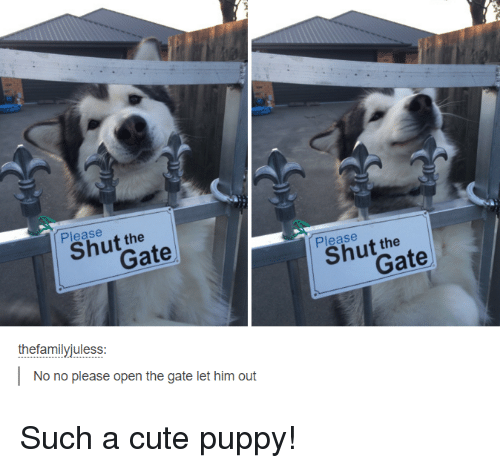 Cute, Memes, and Puppies: Please  the  thefamilyjuless:  No no please open the gate let him out  Please  the Such a cute puppy!