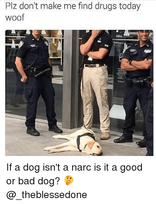 Bad, Drugs, and Memes: Plz don't make me find drugs today  woof If a dog isn't a narc is it a good or bad dog? 🤔 @_theblessedone