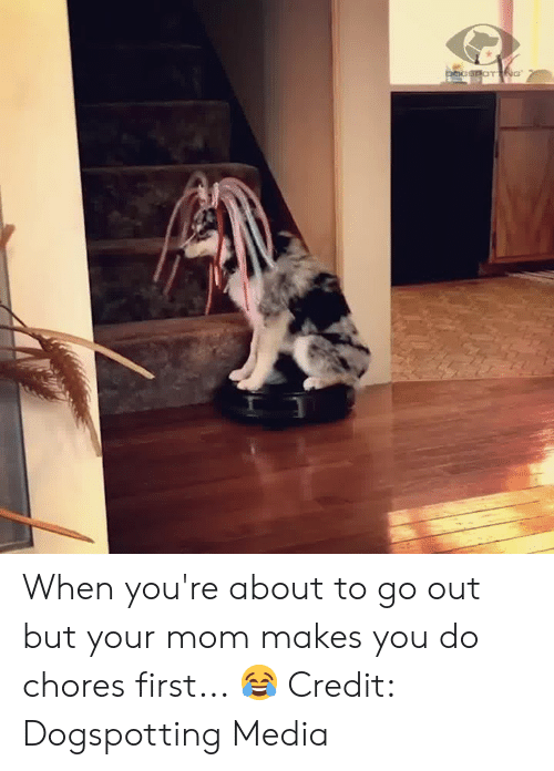 Mom, Media, and First: pocSPOTNG When you're about to go out but your mom makes you do chores first... 😂  Credit: Dogspotting Media