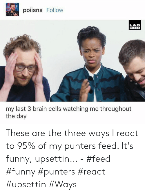 Funny, Bible, and Brain: poiisns Follow  LAD  BIBLE  my last 3 brain cells watching me throughout  the day These are the three ways I react to 95% of my punters feed. It's funny, upsettin... - #feed #funny #punters #react #upsettin #Ways