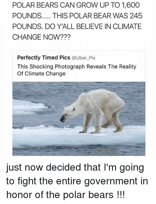 polarized: POLAR BEARS CAN GROW UP TO 1,600  POUNDS  THIS POLAR BEAR WAS 245  POUNDS. DO YALL BELIEVE IN CLIMATE  CHANGE NOW?  Perfectly Timed Pics  a Uber Pix  This shocking Photograph Reveals The Reality  of Climate Change just now decided that I'm going to fight the entire government in honor of the polar bears !!!