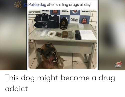 Click, Drugs, and Police: Police dog after sniffing drugs all day  Militar  Milita  Militar  rada de objetos  alizados n  h.  Policia  Militar  FORCA  ATICA  You  Tube  CLICK TO  SUBSCRIBE This dog might become a drug addict