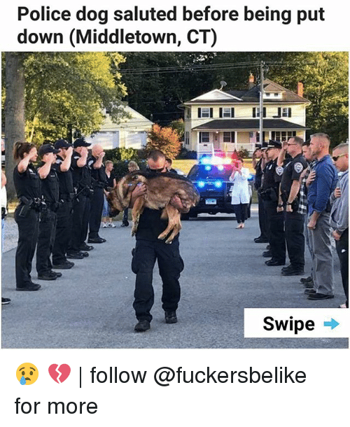 dogged: Police dog saluted before being put  down (Middletown, CT)  Swipe . 😢 💔 | follow @fuckersbelike for more