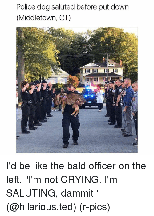 "Be Like, Crying, and Funny: Police dog saluted before put down  (Middletown, CT)  ELIEl  JE I'd be like the bald officer on the left. ""I'm not CRYING. I'm SALUTING, dammit."" (@hilarious.ted) (r-pics)"