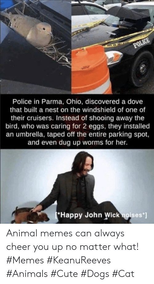 Nest: POLICE  Police in Parma, Ohio, discovered a dove  that built a nest on the windshield of one of  their cruisers. Instead of shooing away the  bird, who was caring for 2 eggs, they installed  an umbrella, taped off the entire parking spot,  and even dug up worms for her.  Happy John Wick noises ] Animal memes can always cheer you up no matter what! #Memes #KeanuReeves #Animals #Cute #Dogs #Cat