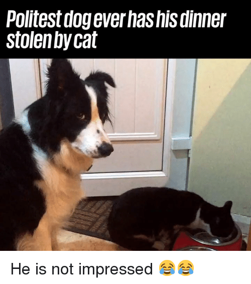 Dank, 🤖, and Dog: Politest dog everhashis dinner  stolen bycat He is not impressed 😂😂