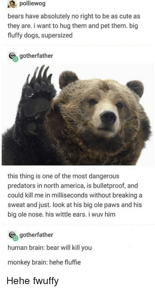 America, Cute, and Dogs: polliewog  bears have absolutely no right to be as cute as  they are. i want to hug them and pet them. big  fluffy dogs, supersized  gotherfather  this thing is one of the most dangerous  predators in north america, is bulletproof, and  could kill me in milliseconds without breaking a  sweat and just. look at his big ole paws and his  big ole nose. his wittle ears. i wuv him  gotherfather  human brain: bear will kill you  monkey brain: hehe fluffie Hehe fwuffy