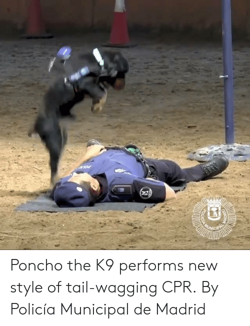 Dank, 🤖, and Cpr: Poncho the K9 performs new style of tail-wagging CPR.  By Policía Municipal de Madrid