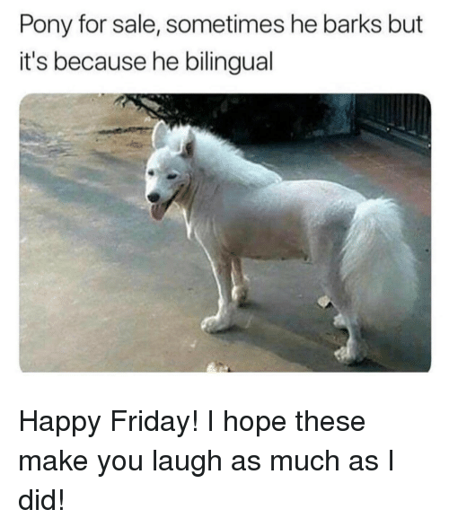 happy friday: Pony for sale, sometimes he barks but  it's because he bilingual Happy Friday! I hope these make you laugh as much as I did!