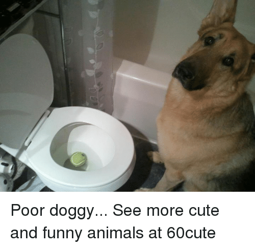 Cute And Funny Animals: Poor doggy...  See more cute and funny animals at 60cute