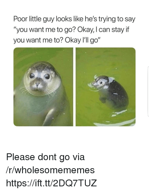 "Okay, Can, and Via: Poor little guy looks like he's trying to say  ""you want me to go? Okay, I can stay if  you want me to? Okay I'lI go"" Please dont go via /r/wholesomememes https://ift.tt/2DQ7TUZ"