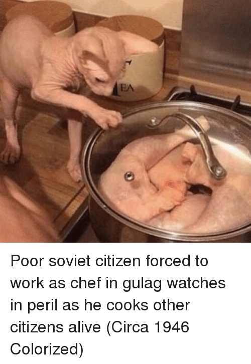 Alive, Work, and Chef: Poor soviet citizen forced to work as chef in gulag watches in peril as he cooks other citizens alive (Circa 1946 Colorized)