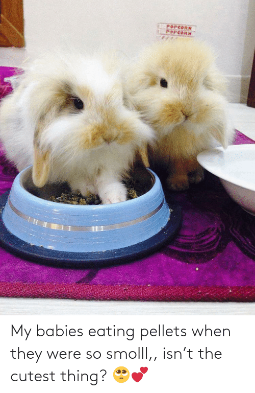 Popcorn, Babies, and They: POPCORN  POPCORN My babies eating pellets when they were so smolll,, isn't the cutest thing? 🥺💕