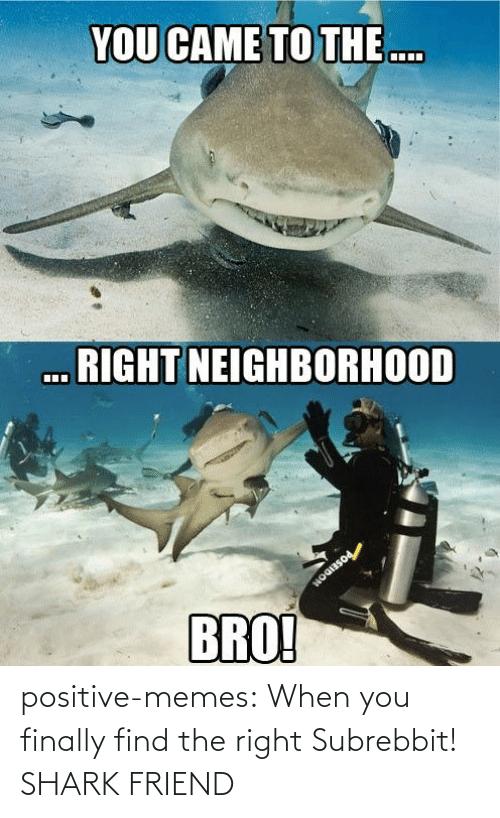 positive: positive-memes:  When you finally find the right Subrebbit!  SHARK FRIEND