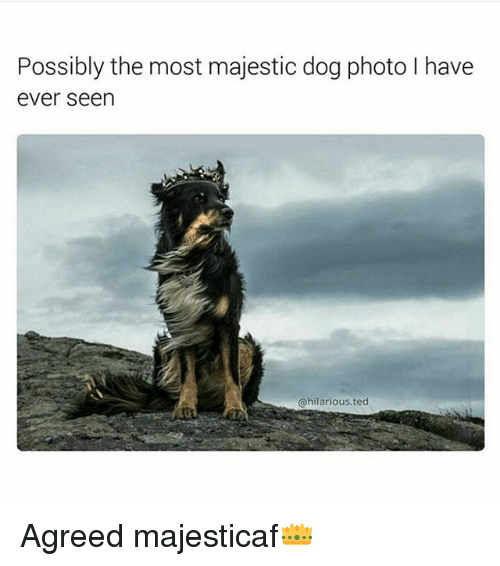Majesticity: Possibly the most majestic dog photo have  ever seen  @hilarious ted Agreed majesticaf👑