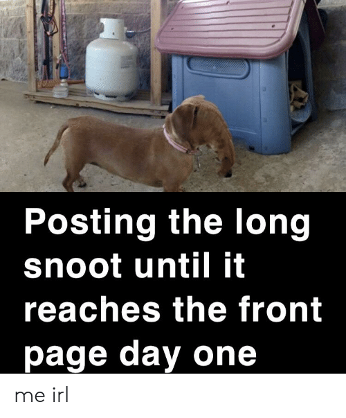 Irl, Me IRL, and Page: Posting the long  snoot until it  reaches the front  page day one me irl