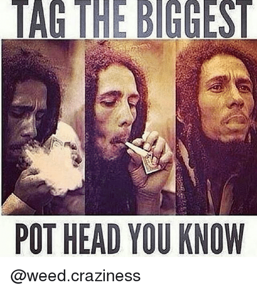 craziness: POT HEAD YOU KNOW  TR. @weed.craziness