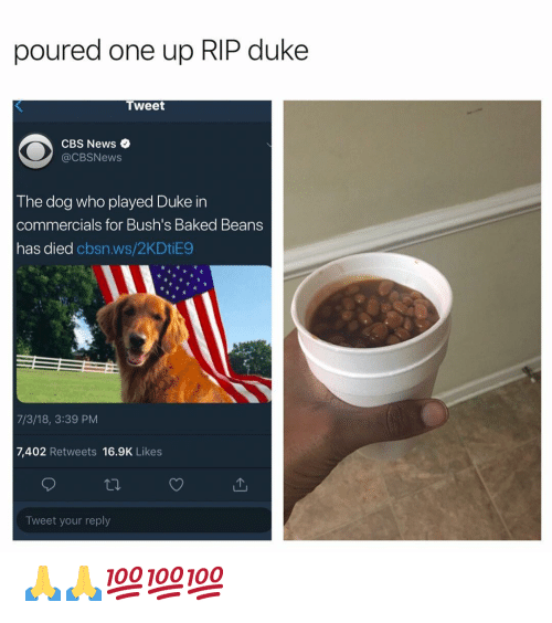 Baked, News, and Cbs: poured one up RIP duke  Tweet  CBS News  @CBSNews  The dog who played Duke in  commercials for Bush's Baked Beans  has died cbsn.ws/2KDtiE9  7/3/18, 3:39 PM  7,402 Retweets 16.9K Likes  Tweet your reply 🙏🙏💯💯💯