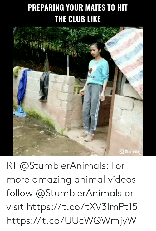Animal Videos: PREPARING YOUR MATES TO HIT  THE CLUB LIKE  Srce  S Stumbler RT @StumblerAnimals: For more amazing animal videos follow @StumblerAnimals or visit https://t.co/tXV3ImPt15 https://t.co/UUcWQWmjyW
