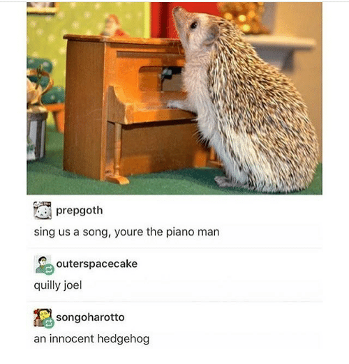 Hedgehoging: prepgoth  sing us a song, youre the piano man  outerspacecake  quilly joel  songoharotto  an innocent hedgehog