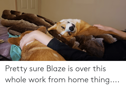 over-this: Pretty sure Blaze is over this whole work from home thing....