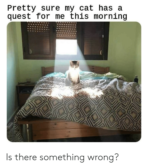Quest, Cat, and For: Pretty sure my cat has a  quest for me this morning Is there something wrong?