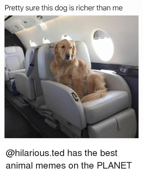 Funny, Memes, and Ted: Pretty sure this dog is richer than me @hilarious.ted has the best animal memes on the PLANET