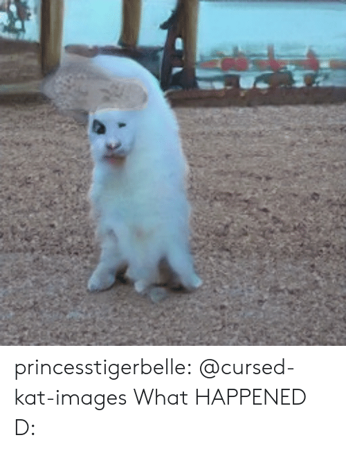 Tumblr, Blog, and Images: princesstigerbelle:  @cursed-kat-images   What HAPPENED D: