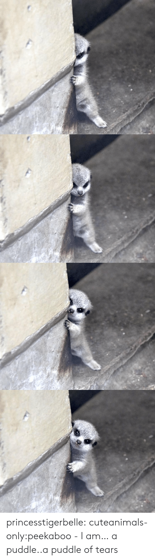 Cute, Tumblr, and Blog: princesstigerbelle:  cuteanimals-only:peekaboo - I am… a puddle..a puddle of tears