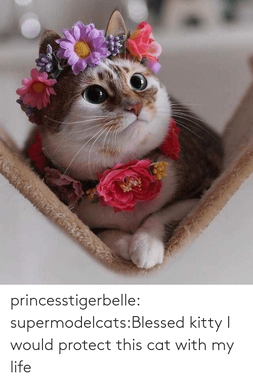 blessed: princesstigerbelle:  supermodelcats:Blessed kitty I would protect this cat with my life