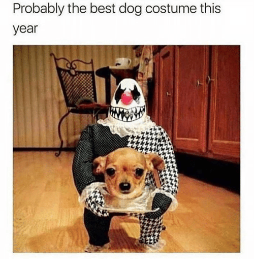 Best, Dog, and This: Probably the best dog costume this  year