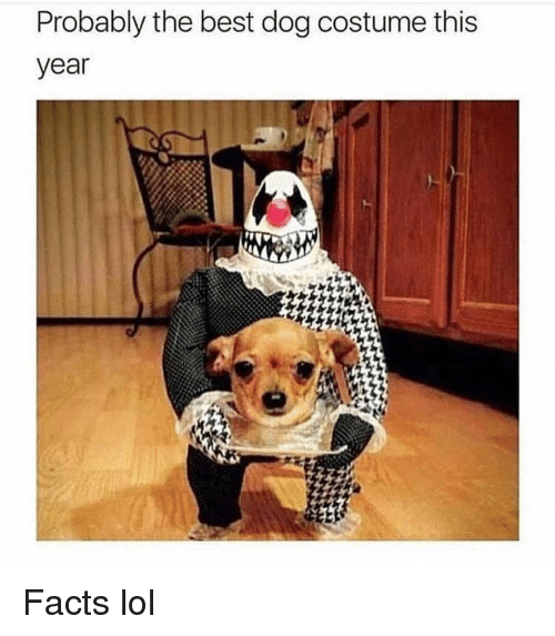 Facts, Funny, and Lol: Probably the best dog costume this  year Facts lol