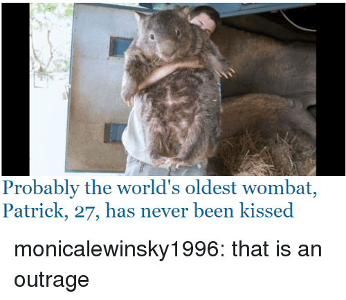 Outrage: Probably the world's oldest wombat,  Patrick, 27, has never been kissed monicalewinsky1996: that is an outrage