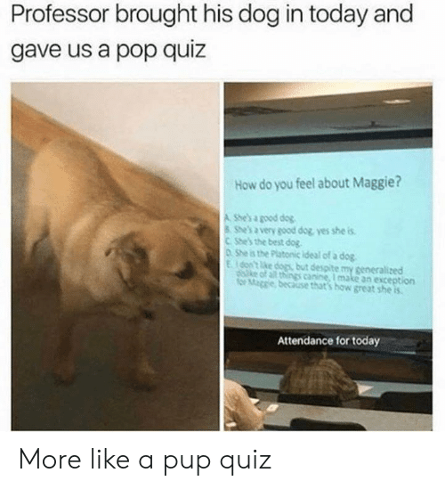 Dogs, Pop, and Best: Professor brought his dog in today and  gave us a pop quiz  How do you feel about Maggie?  A She's a good dog  She's a very good dog yes she is  CShe's the best dog  0 She is the Platonic ideal of a dog  Eon't ke dogs but despite my generalized  diske of all things canine, I make an exception  for Mage because that's how great she is  Attendance for today More like a pup quiz