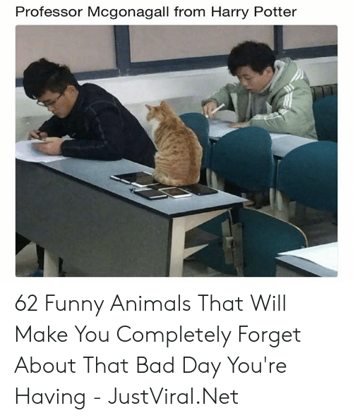 Funny animals: Professor Mcgonagall from Harry Potter 62 Funny Animals That Will Make You Completely Forget About That Bad Day You're Having - JustViral.Net
