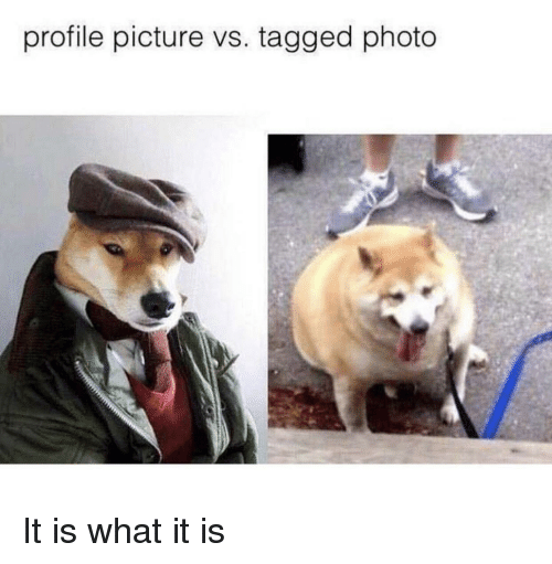 Tagged, Photo, and Picture: profile picture vs. tagged photo It is what it is