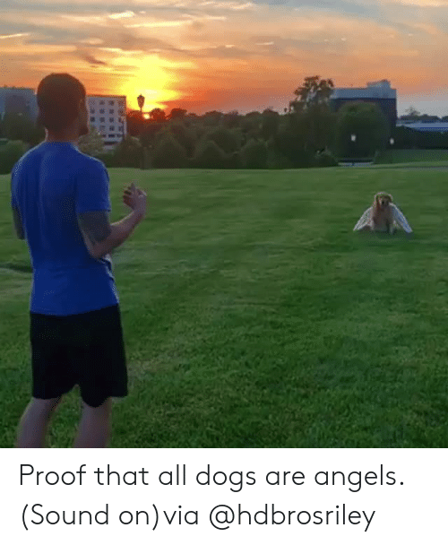 Dogs, Instagram, and Target: Proof that all dogs are angels. (Sound on)via@hdbrosriley