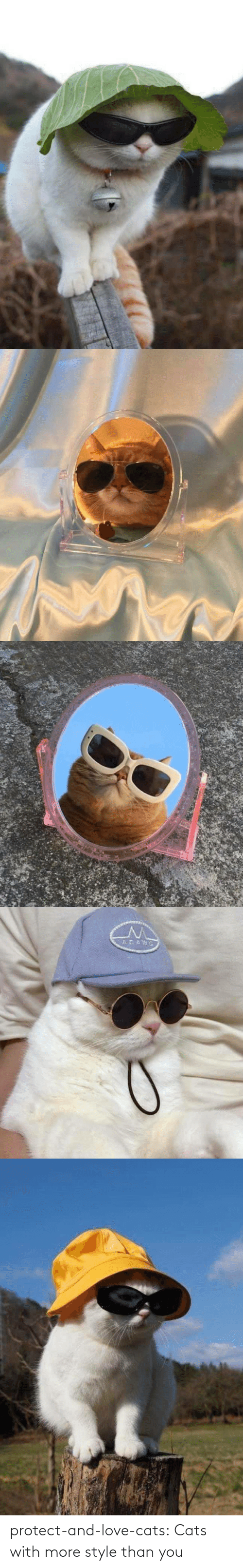 love cats: protect-and-love-cats:  Cats with more style than you