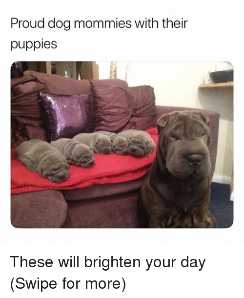 Funny, Puppies, and Proud: Proud dog mommies with their  puppies These will brighten your day (Swipe for more)