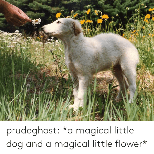 Dog: prudeghost:  *a magical little dog and a magical little flower*