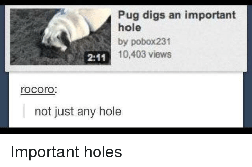 digs: Pug digs an important  hole  by pobox231  10,403 views  rocorO  not just any hole Important holes