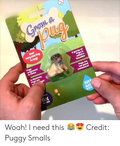 Pog, China, and Pug: pug  verg own Pog  in China  JUST Woah! I need this 😂😍  Credit: Puggy Smalls