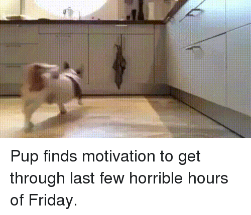 Friday, Pup, and Motivation: Pup finds motivation to get through last few horrible hours of Friday.